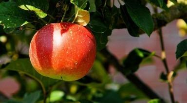 Cum sa ai pomi fructiferi rodnici