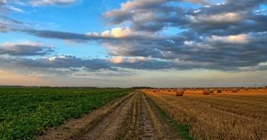 Tendinte in agricultura pe care orice gospodar trebuie sa le stie