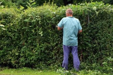 Cand si unde ai nevoie de un trimmer de gard viu?