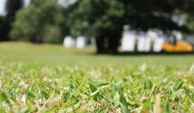 Cand sa folosesti un trimmer pentru iarba?