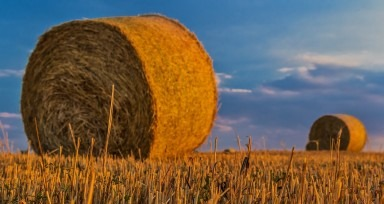 Ce inseamna sa faci agricultura sustenabila?