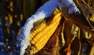 Ce lucrari agricole efectuam iarna?