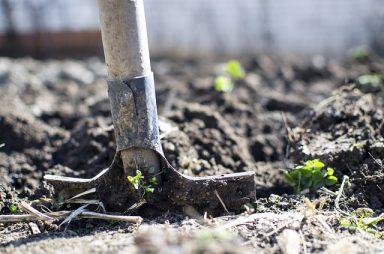 Ce activităţi agricole să desfășori odată cu venirea primăverii