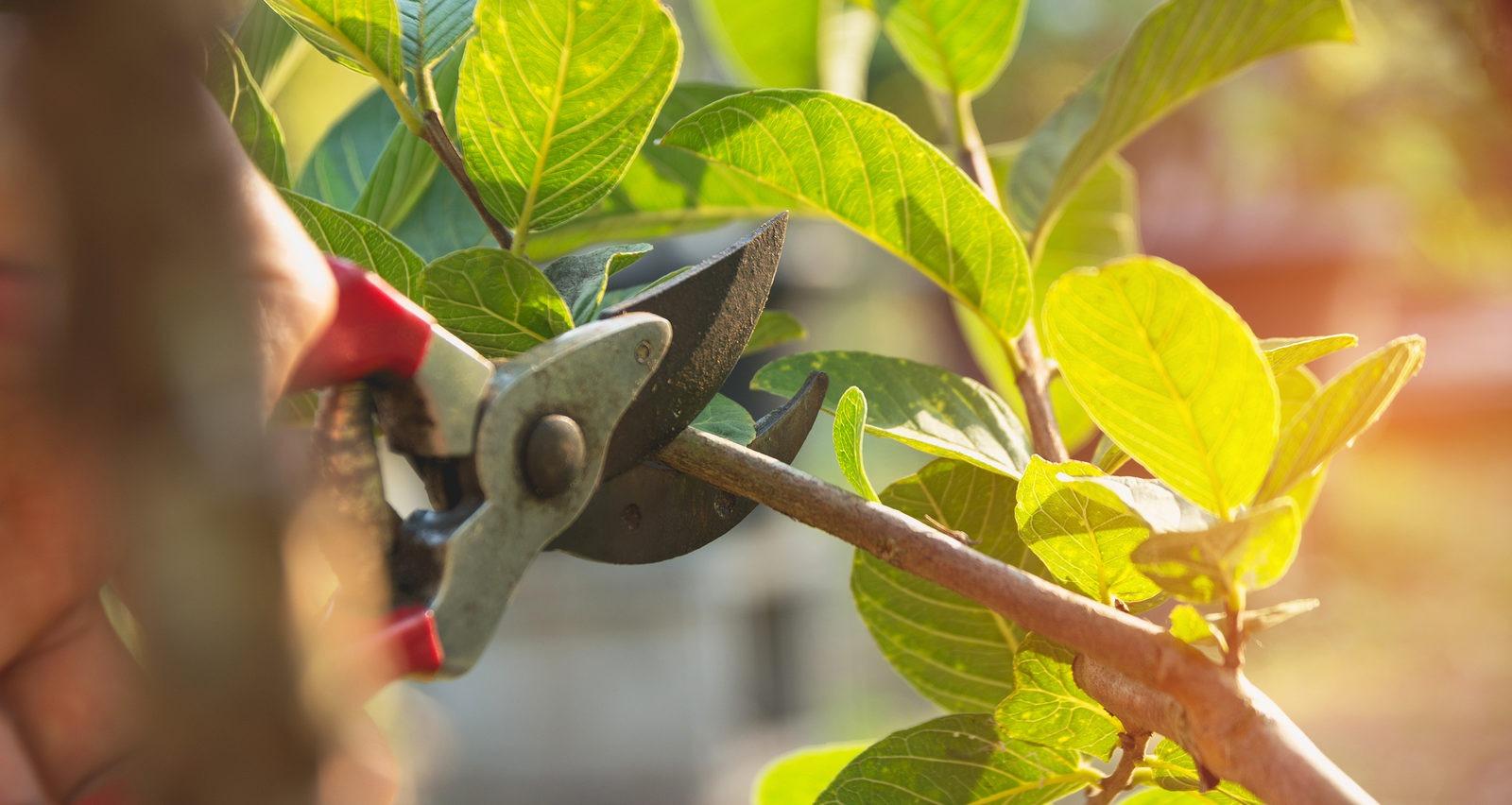 Când și cum se face tăierea pomilor fructiferi: Ghid complet