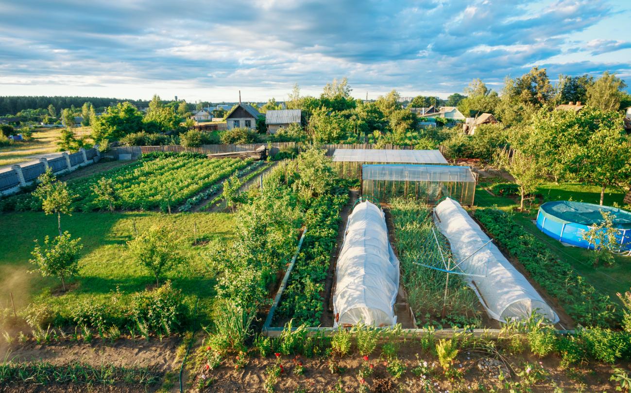 Sfaturi pentru parcelarea gradinii de legume