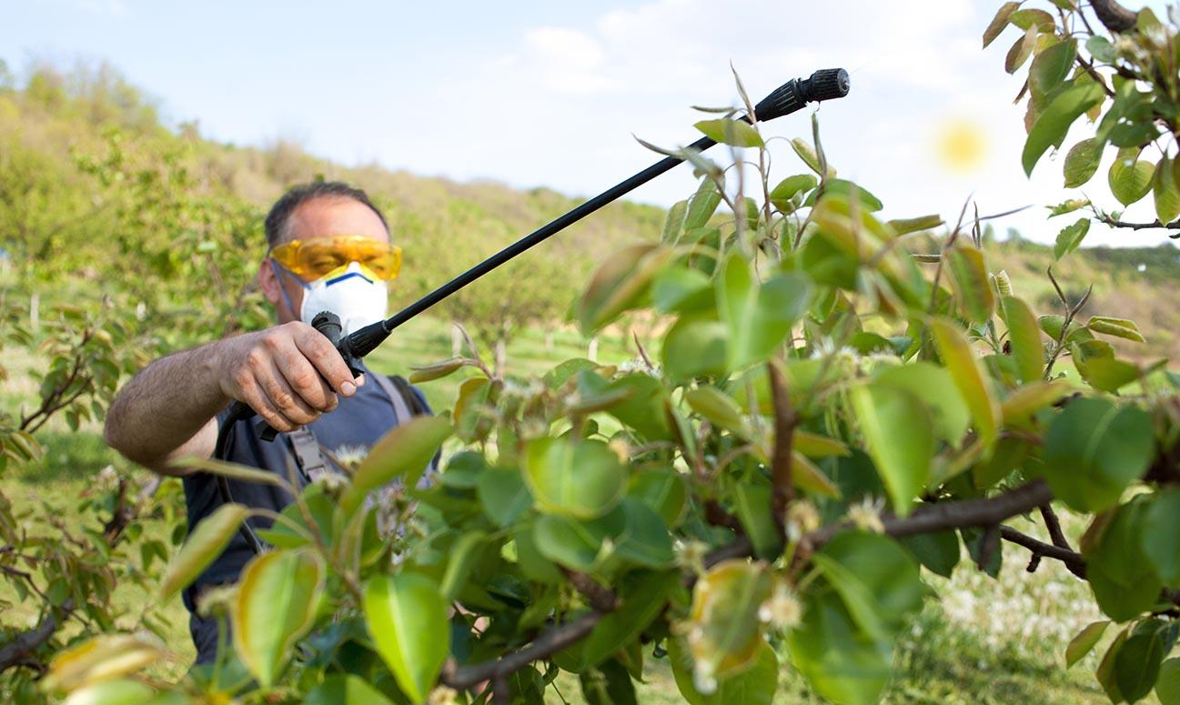 Cum obții pesticide organice și îngrășăminte naturale în grădina ta