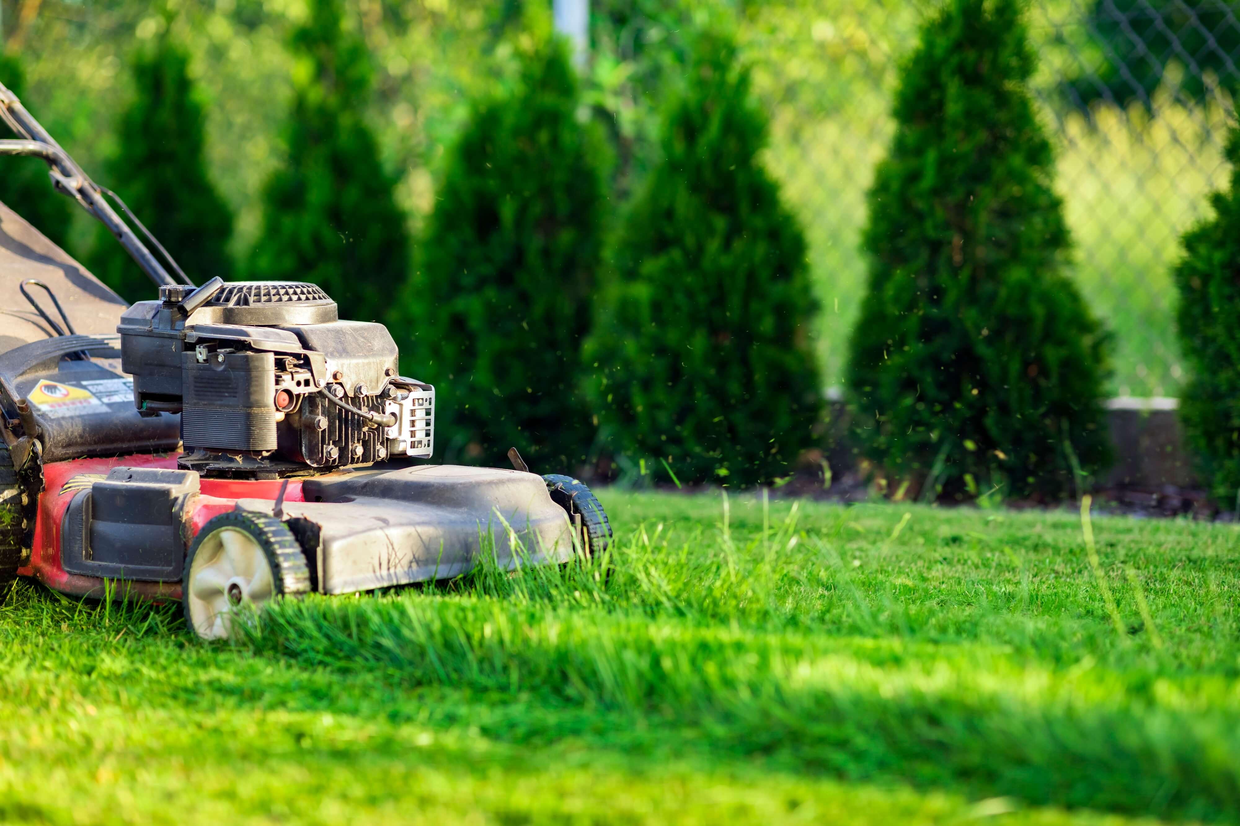 Gazonul – Tot ce trebuie sa stii despre plantare, fertilizare si intretinere